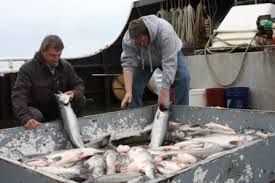 Duke's has built strong relationships with fishermen in Alaska, and trusts them to deliver the highest-quality seafood.