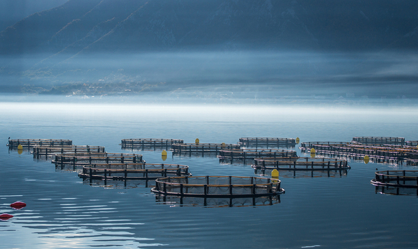 Fish farms continue to generate fierce debate about their health and safety policies, as well as their impact on the environment.