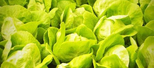 Organic Vegetables: So Hip, So Safe