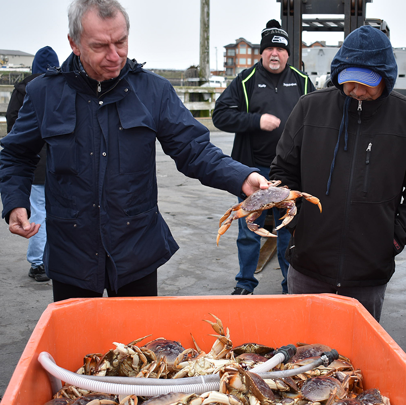 Westport Dungeness Crabs