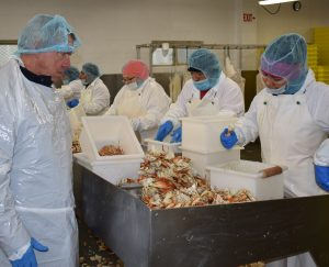 Processing Fresh Dungeness Crab